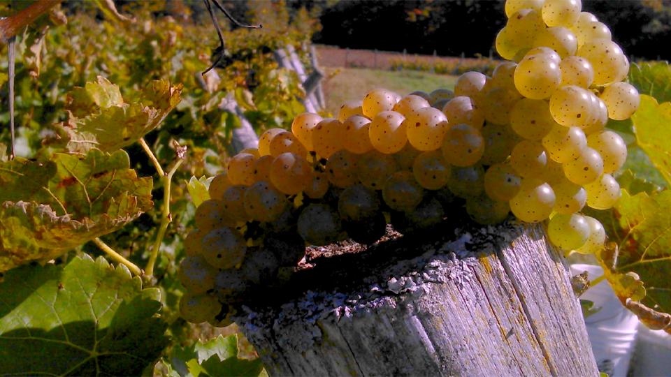 Vignoble et cidrerie Val Caudalies