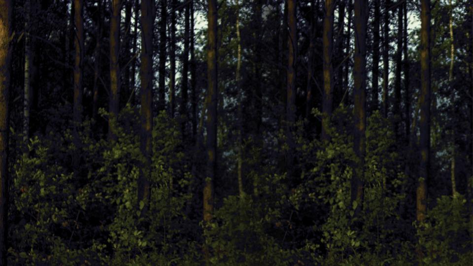Forêt et bois - adaptation aux changements climatiques