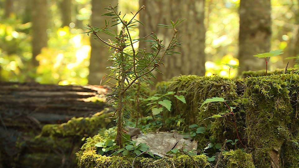 Les Semeurs des forêts
