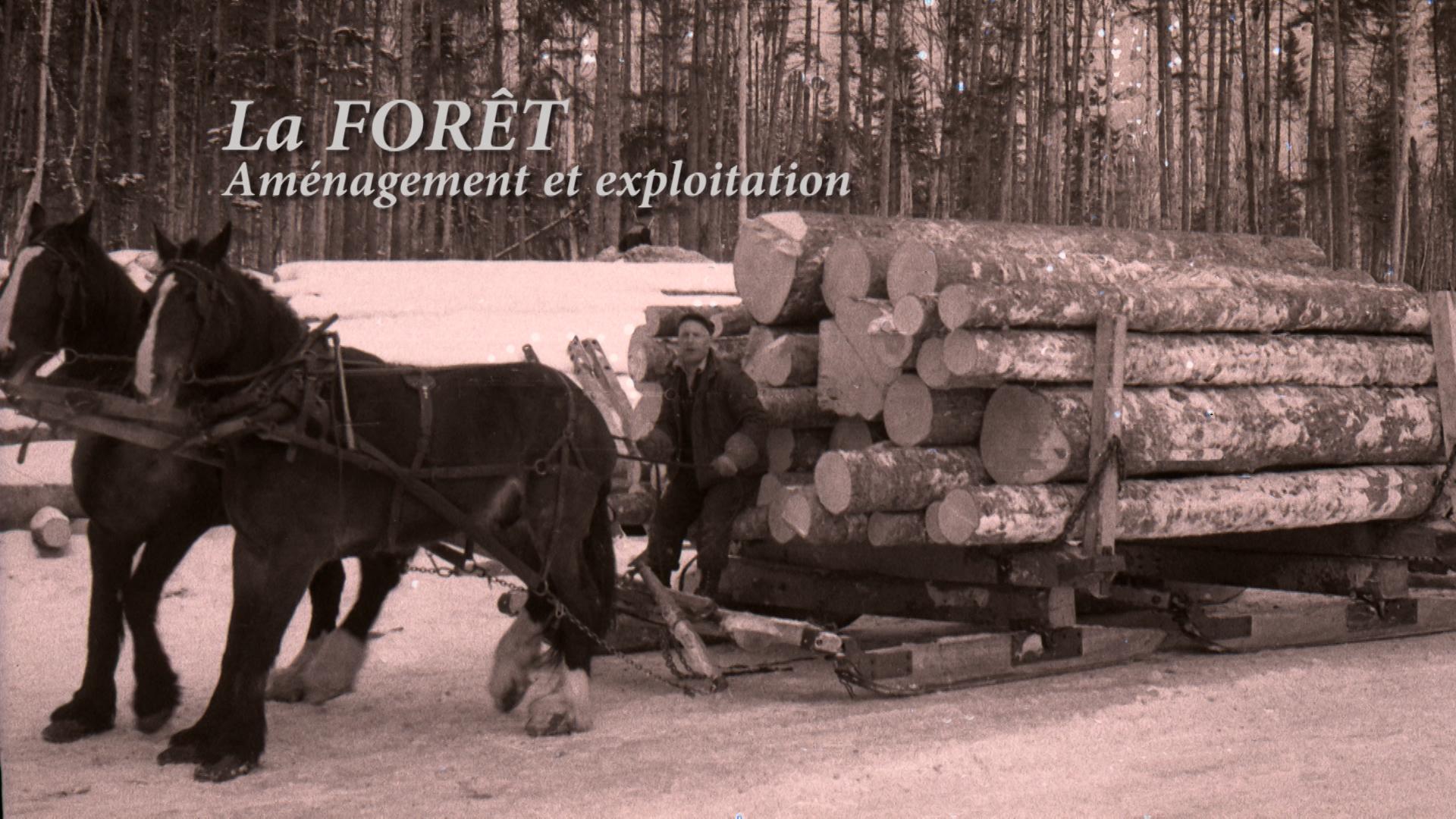 La forêt au Témiscouata, partie 1